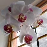 Mi Orquídea :)
