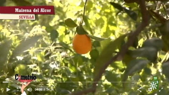 Naranjas ecológicas sevilla en Canal Sur TV
