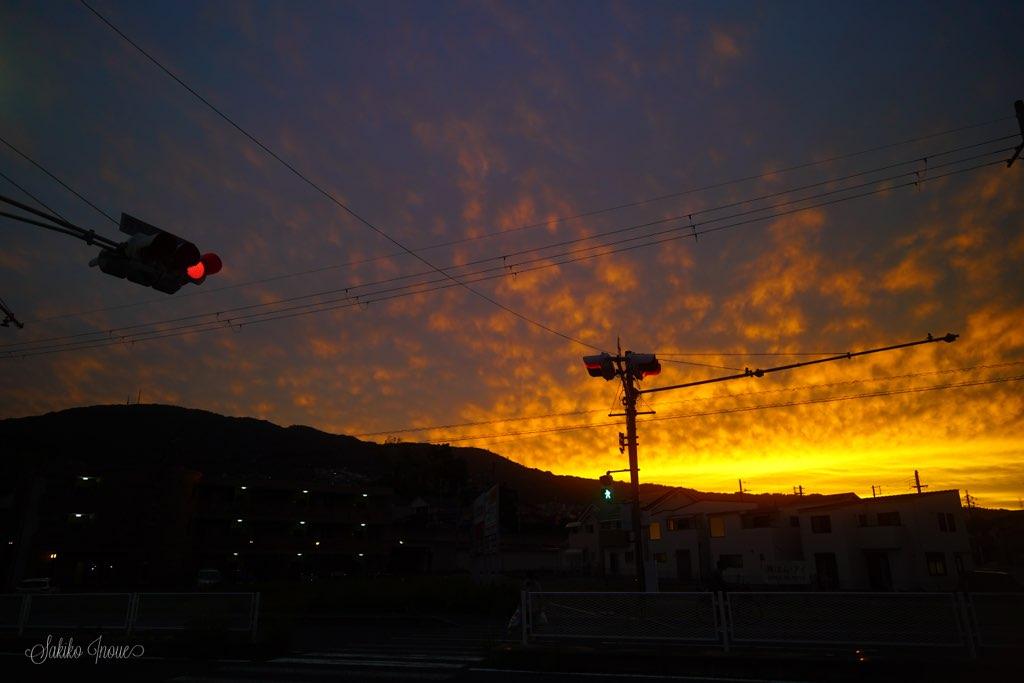 TOKYO GRAPHER