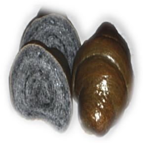 竹炭パウダー入りロールパン