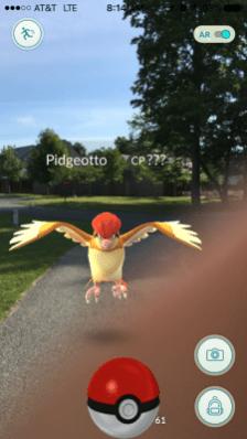 pokemon_go_pidgeotto