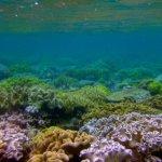 Diving Australia - The GBR