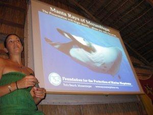 Diving Africa - Marine Megafauna Foundation