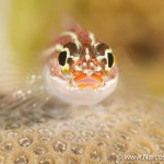 Choosing an Underwater Camera - Macro