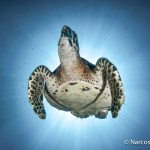 Underwater Photography Courses - Turtle