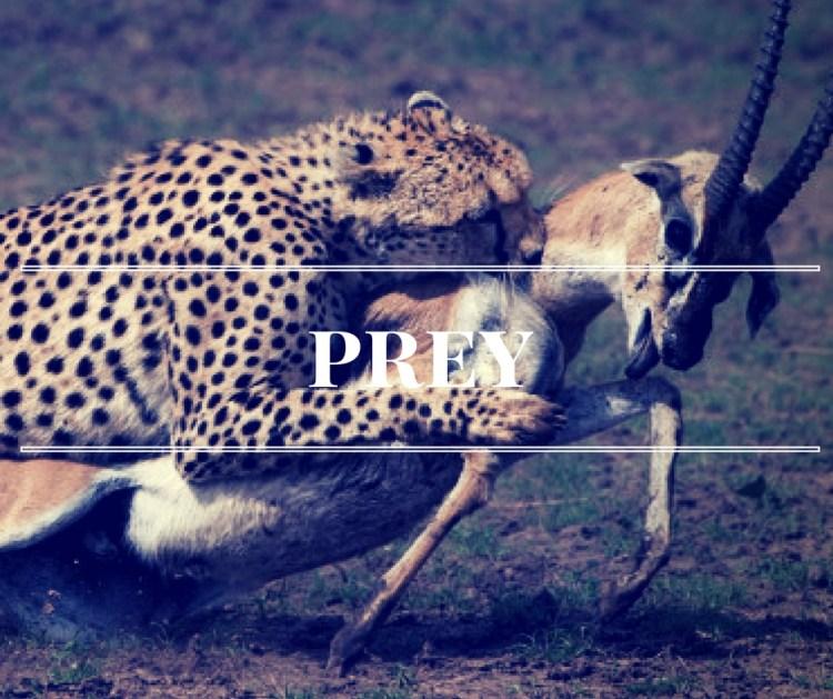prey-2