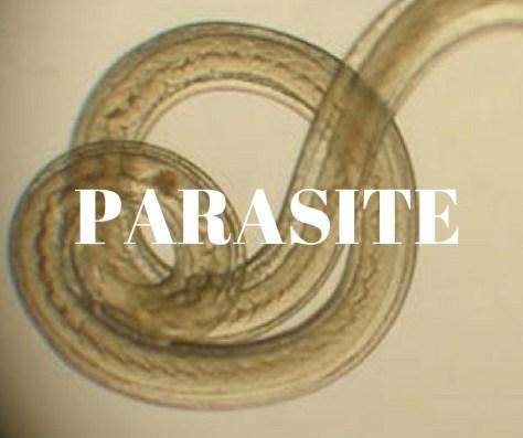 parasite-4