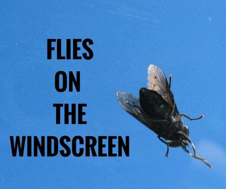 FLIESON THEWINDSCREEN.jpg
