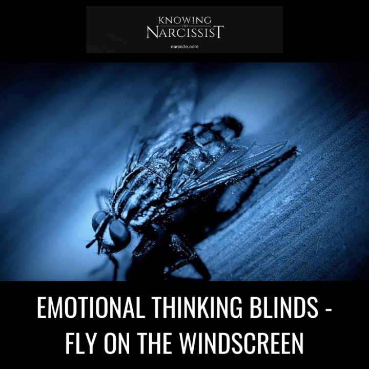 EMOTIONAL THINKING BLINDS - FLY ON THE WINDSCREEN