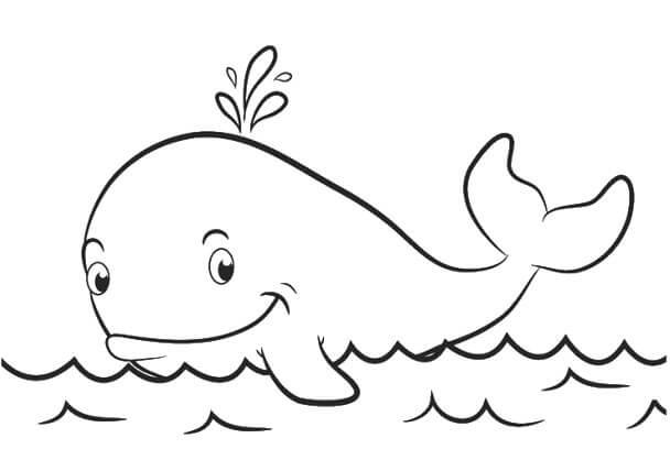 Contoh Sketsa Gambar Ikan Paus Siap Download Dan Diwarnai