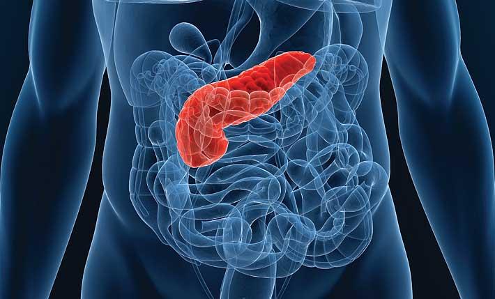 Болиголов от поджелудочной железы