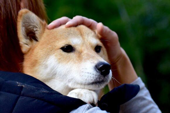頭を撫でられている犬
