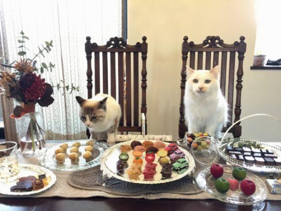 猫2匹とデザート