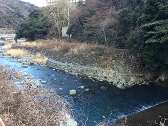 川には野鳥もいます。