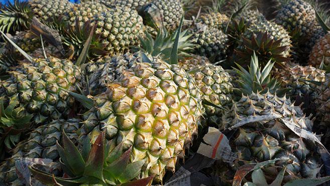 甘い香りに包まれたパイナップルの郷-台南市・關廟