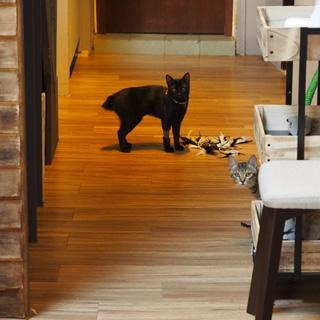喝個咖啡休息一下吧!「弄宅咖啡」保護猫のいる温かい空間