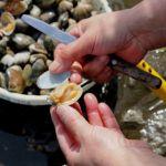 千葉県の富津海岸潮干狩場はアサリがたくさん採れてBBQもできる
