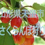 山形県天童市でさくらんぼ狩りの食べ放題プランのあるお勧め農園2選