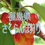 福島県でさくらんぼ狩りの食べ放題プランのあるおススメ農園3選