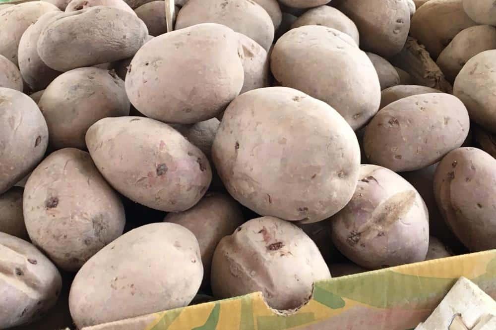 KARAĐORĐE TUKAO SRBE: Nisu hteli da jedu krompir, mislili da je podvala! 1