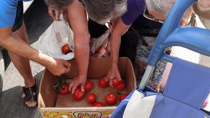 GLEDAJ ALEKSANDRE, TVOJE ZLATNO DOBA: Besplatni paradajz razdeljen za minut!(VIDEO) 1