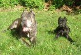 Mojo and baby Gypsy