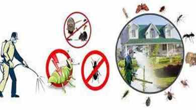 ارخص شركة مكافحة حشرات بالدوادمي