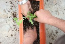 تزويد نساء فلسطينيات بدفيئيات زراعية