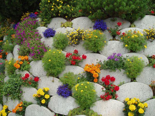Низкорослые цветы для клумб: название, описание и фото ...