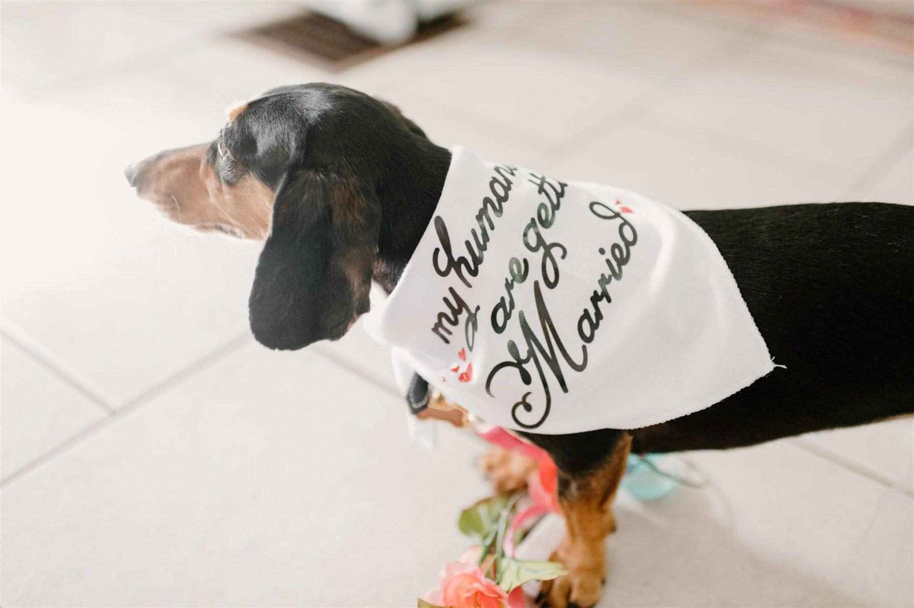 Dog wedding bandana