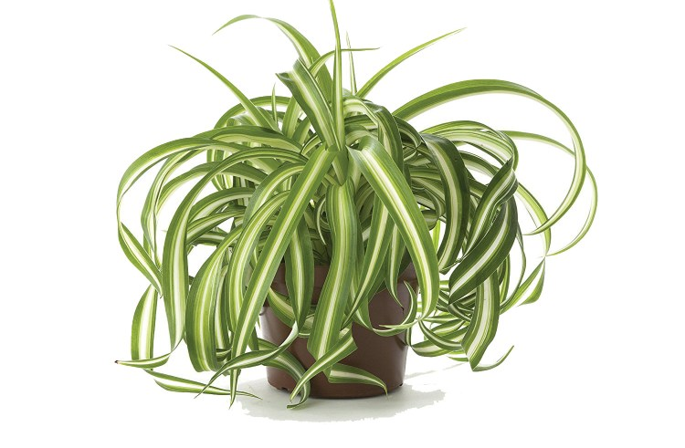 6 Plants That Can Help Purify Your Indoor Air