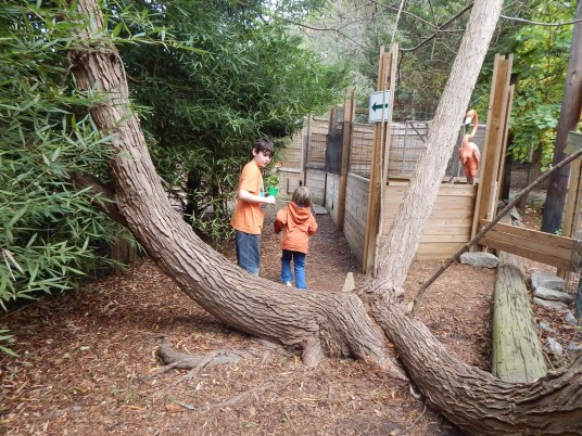Harmony Safari Park - Entrance to Tortises