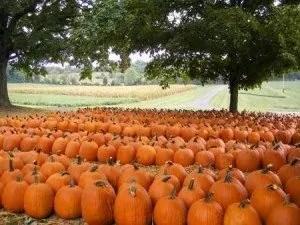 Boyd's Pumpkin Patch