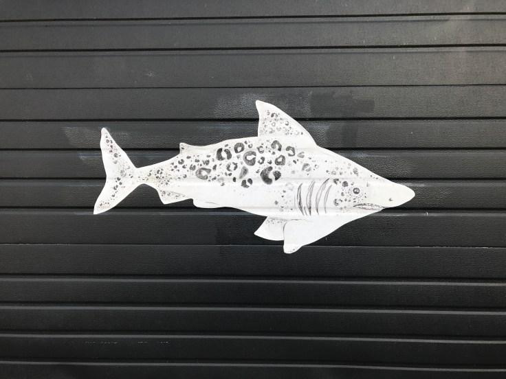 Miller Shark