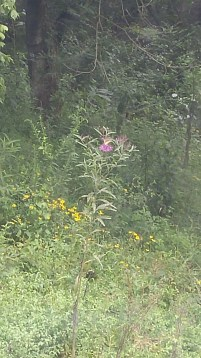 enjoying the wildflower nectar