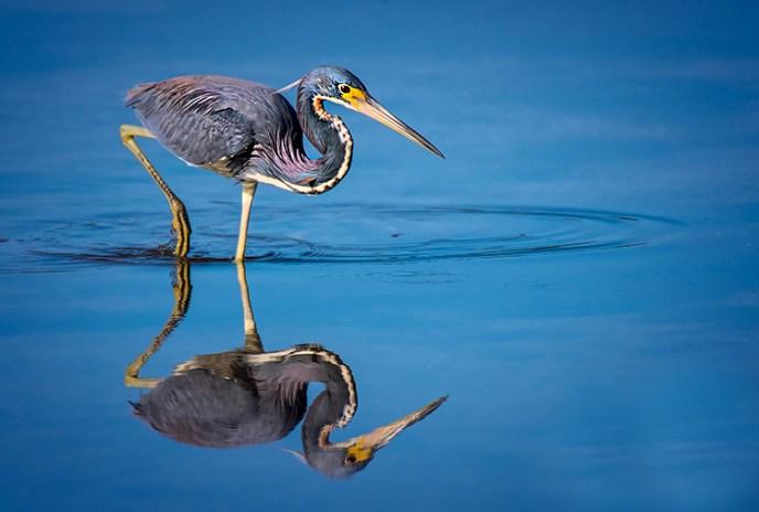 Joe Senzatimore - Reflection In Blue - Salon IOM