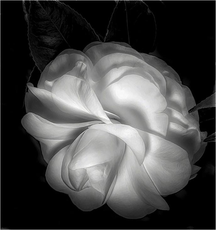 Joe Senzatimore - Beauty In Monotone - BW Salon IOM