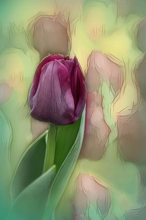 Valerie Interligi - Abstract Tulip - Creative IOM