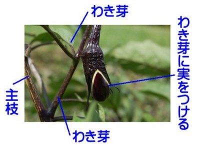 nasu-wakimenew