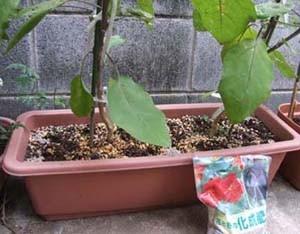 nasu-planter003