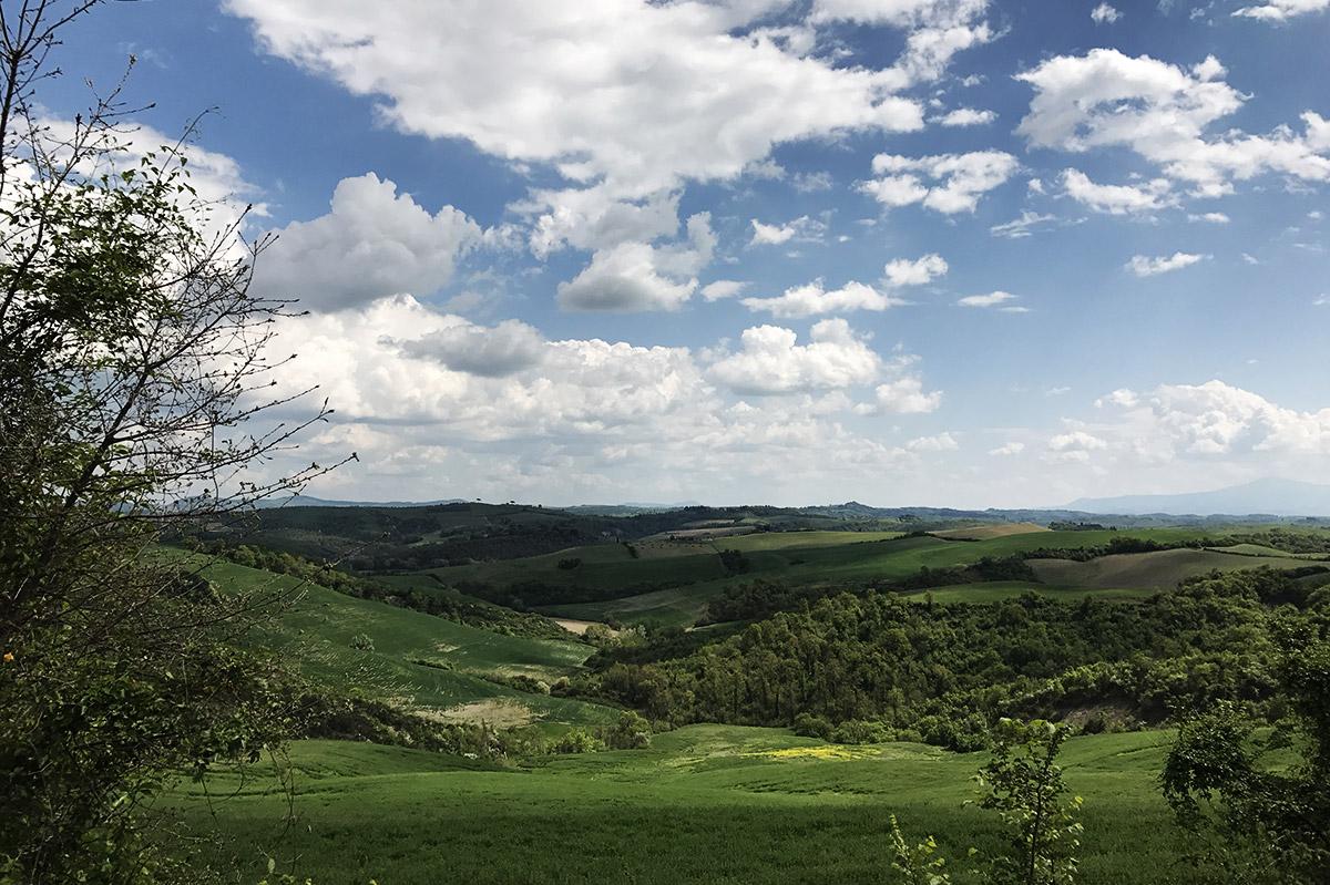 paesaggio per Asciano