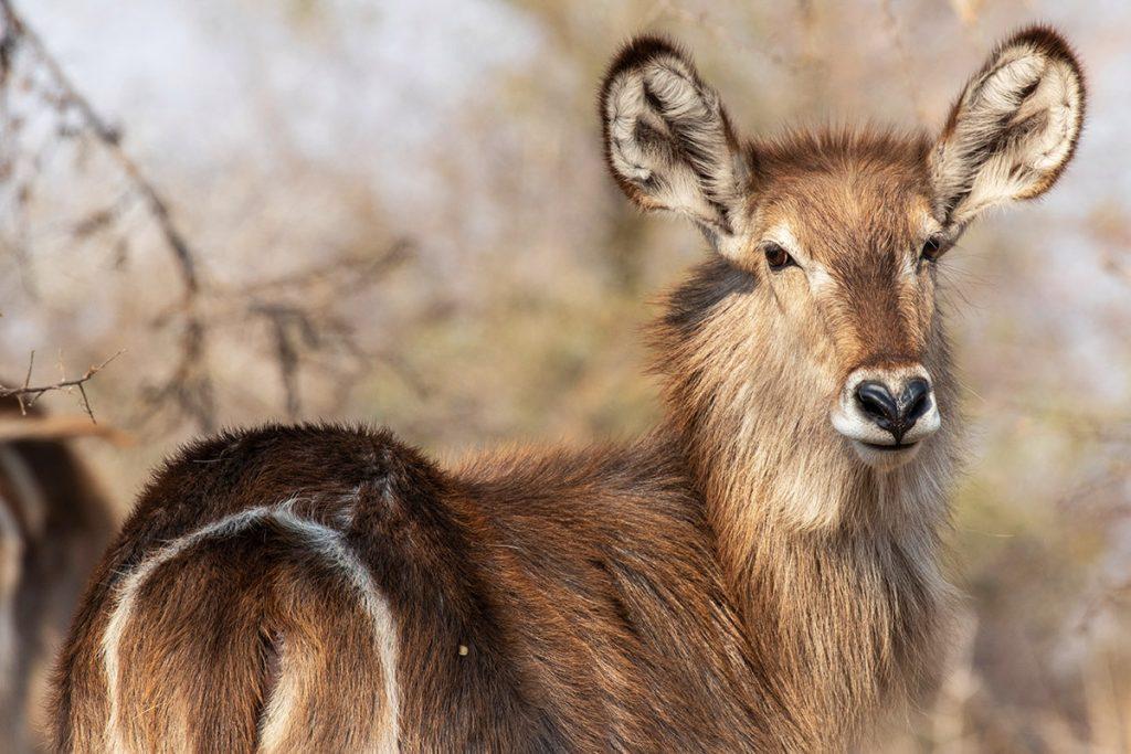 Niala-Parco-Kruger