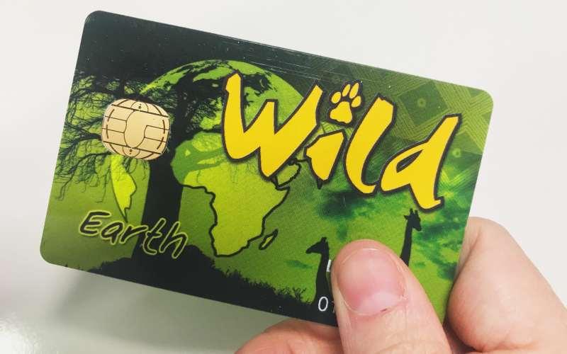 wild card guida