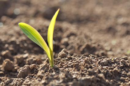 Proyecto, futuro, semilla, terreno fertil, preparación
