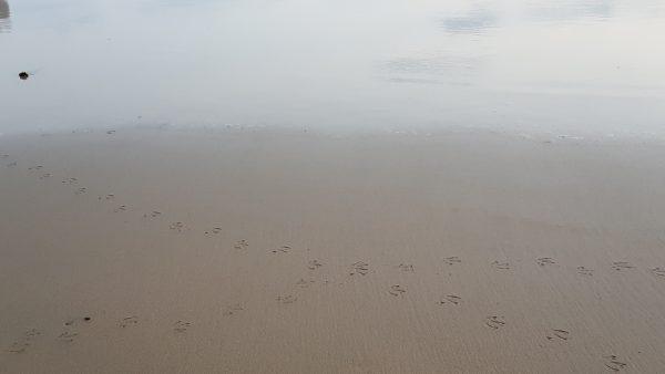 Huellas de gaviotas en la arena haciendo una cruz como una encrucijada de caminos