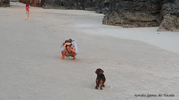 fotografiar mascota