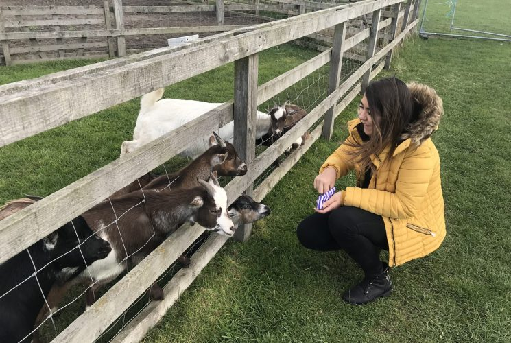 Yorkshire Days Out: Animal Fun at Beetle-Bank Farm, Murton