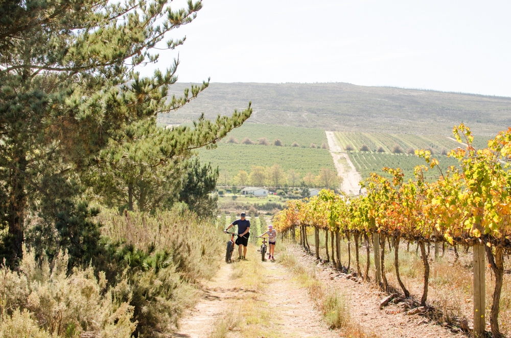 family holiday in the Cape South Africa