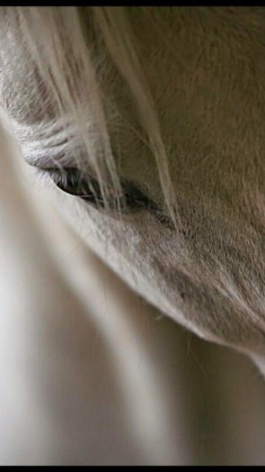 Morpheus_White_Horse