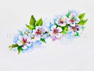 Apple blossom. Watercolor painting
